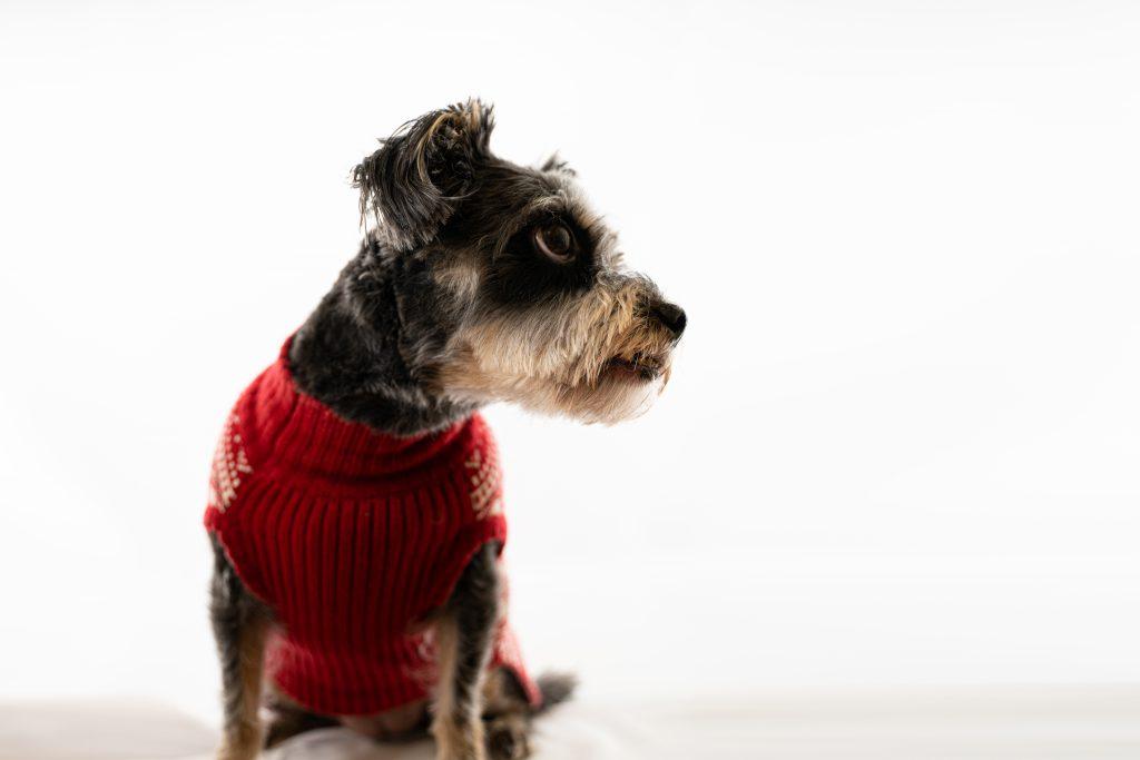 pet photography dog